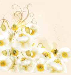 Beautiful background with white poppy flowers vector