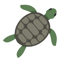 Green sea turtle icon isolated vector