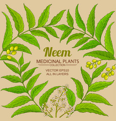 neem branches frame on color background vector image