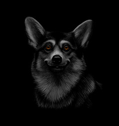 portrait of a welsh corgi head on a black vector image