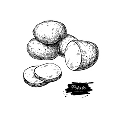 Potato drawing Isolated potatoes heap and vector