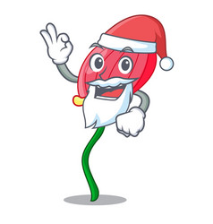 Santa pink anthurium flowers in character funny vector