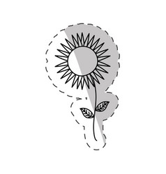sunflower spring cut line vector image