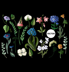 Wild flowers isolated on a black background vector