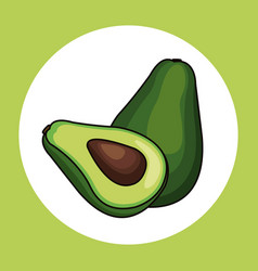 avocado healthy fresh image vector image