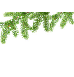 Fir branches border christmas tree frame pine vector