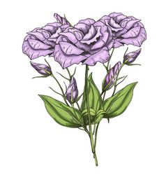 hand drawn bouquet of eustoma flowers isolated on vector image