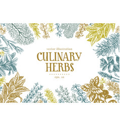Hand drawn set culinary herbs and spices vector