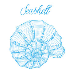 Nautilus sea shell hand drawn blue linear vector