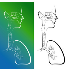 Sketch of respiratory system organs vector