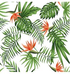 Strelitzia orange white background pattern vector