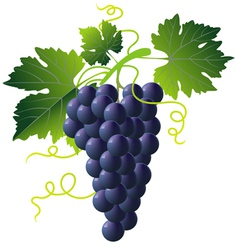 grape cartoons vector image vector image