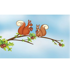 Squirrels vector image