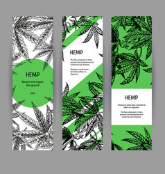 banners with hemp leaves black-white design vector image