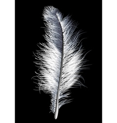feather white vector image