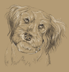 monochrome fluffy dog hand drawing portrait vector image