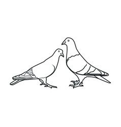 realistic pigeon vector image