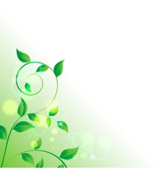 branch with fresh green leaves vector image vector image