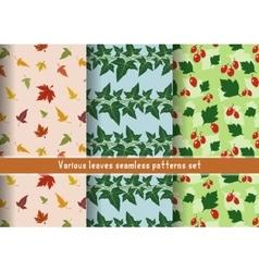 leaves patterns set vector image
