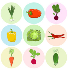 Colored icons vegetables vector