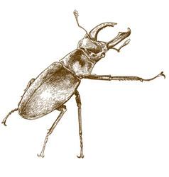 Engraving of beetle deer vector
