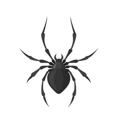 Spider in a flat style vector
