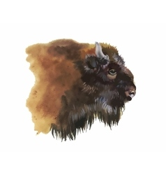 Watercolor european bison animal isolated on white vector
