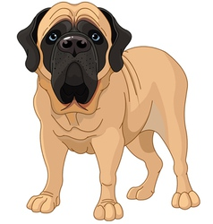 english mastiff vector image