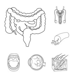 Internal organs of a human outline icons in set vector