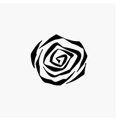 monochrome black and white rose isolated on vector image