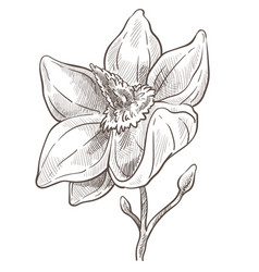 blossom outline art floral symbol for drawing vector image