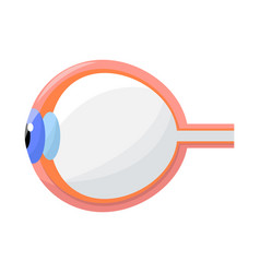 Eyeball and eye sign set vector