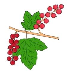 Currants plant fruits vector image