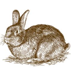 engraving of bunny vector image