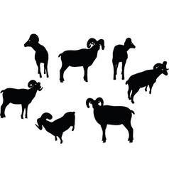 Big horn sheep silhouette in twist head pose vector