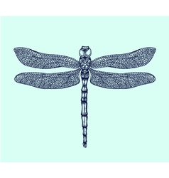 Hand-drawn dragonfly vector image