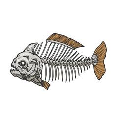 piranha fish skeleton color sketch engraving vector image