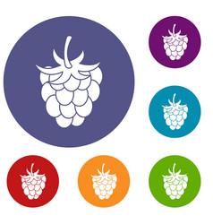 raspberry or blackberry icons set vector image