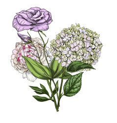 hand drawn bouquet of phlox eustoma and peony vector image vector image