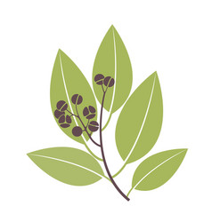 Bay leaf bay vector