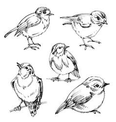 Birds set hand drawn cute black outlines vector