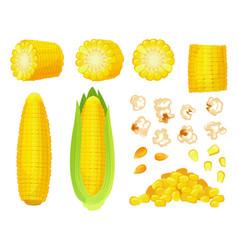 Cartoon corn golden maize harvest popcorn corny vector