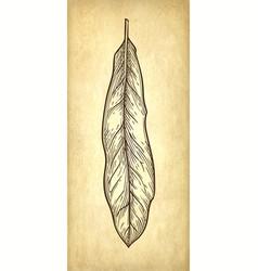 Ink sketch of macadamia leaf vector