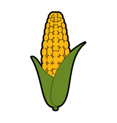 Isolated corn vegetable vector