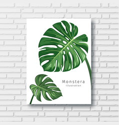 monstera green leave white frame on block wall vector image