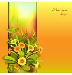 Orange yellow primroses vector image