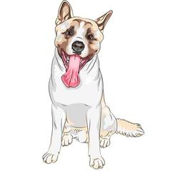 Dog American Akita breed laughs vector image vector image