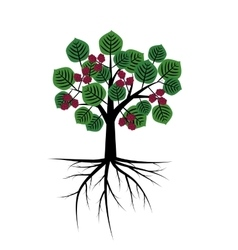 Mulberry abstract tree vector image vector image