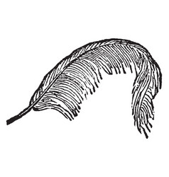Feather vintage vector