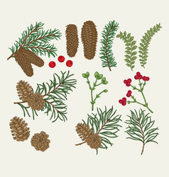 hand drawn christmas plants pine spruse fir vector image